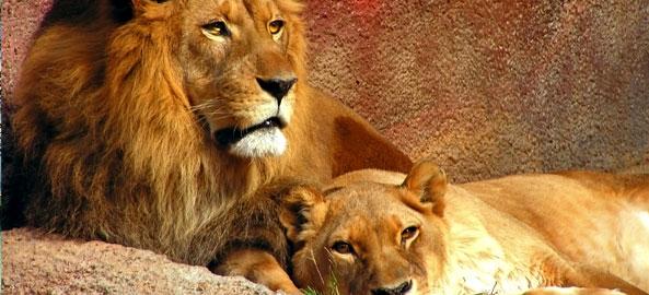 Safari Karaiby